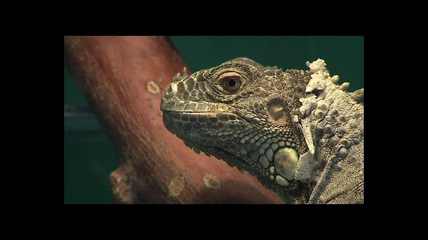 Video Pašování exotických zvířat