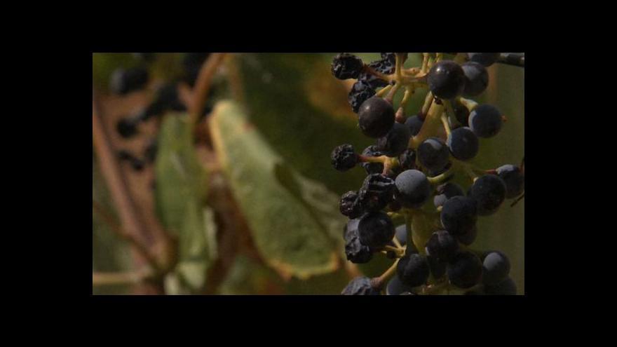 Video Španělské vinaře trápí sucho