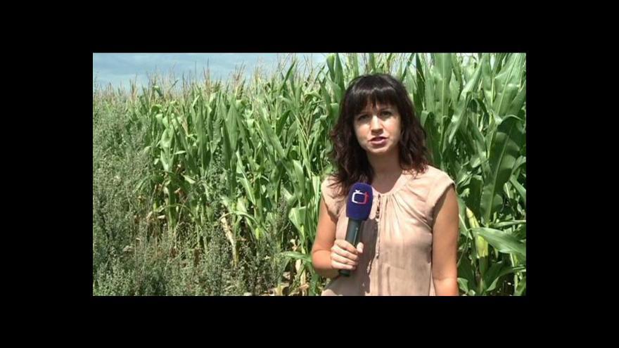 Video Reportáž Martiny Vysloužilové
