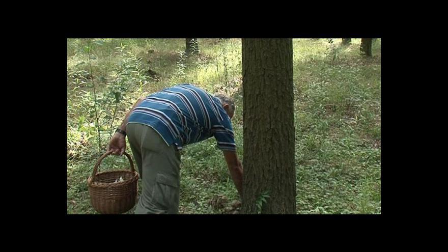 Video Václav Koplík – předseda ratíškovického mykologického kroužku