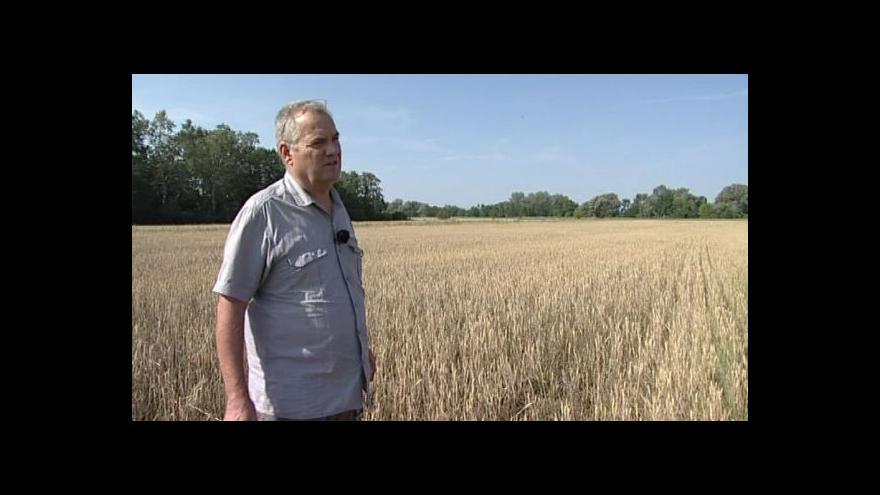 Video Zemědělec Ivan Vokurka o úrodě pšenice