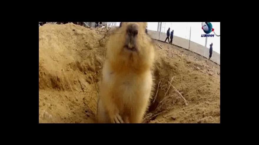 Video Sysel si oblíbil bydliště v Bajkonuru