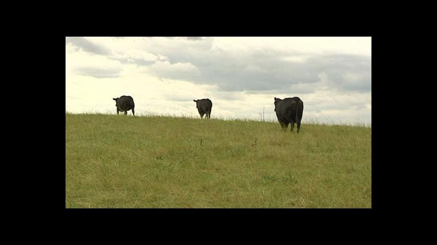 Video Reportáž Blanky Poulové ke krádežím dobytka