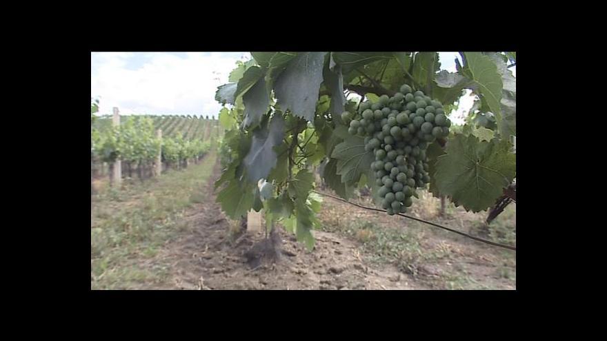 Video Tajemník Svazu vinařů Martin Půček