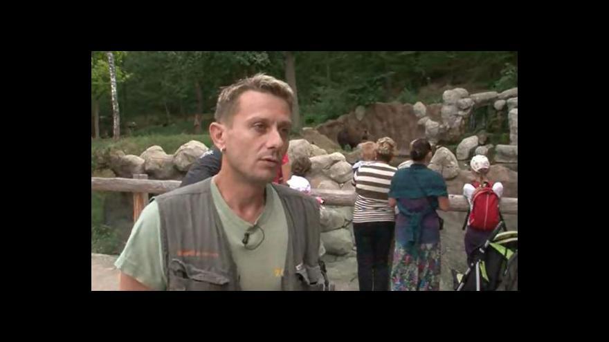 Video O medvíďatech hovoří jejich ošetřovatel Milan Šebesta