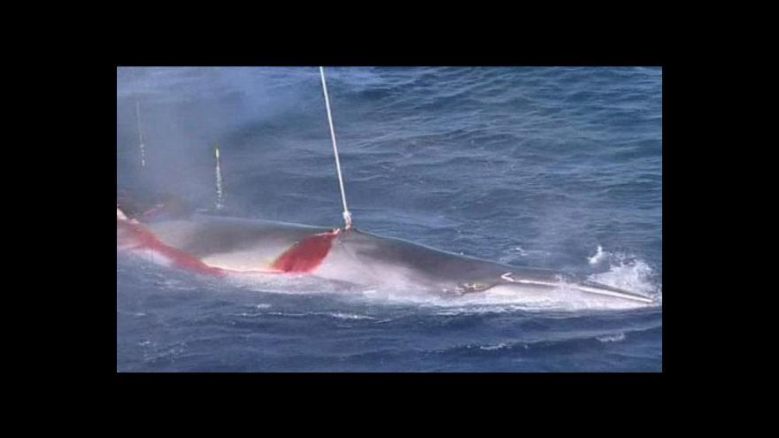 Video Jižní Korea chce ve svých vodách zahájit lov velryb