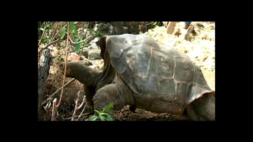 Video Želví samec uhynul