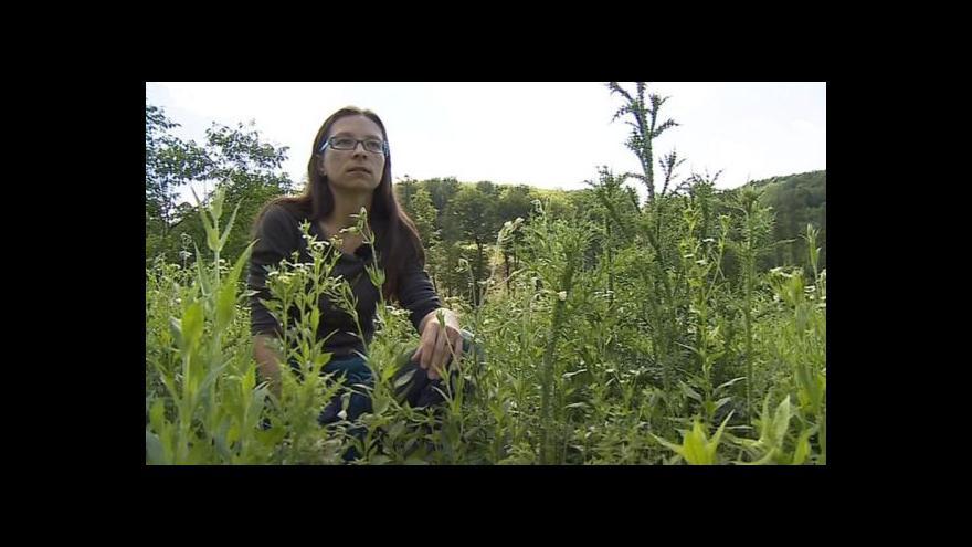 Video O jiných lokalitách pro motýly hovoří bioložka Zuzana Veverková