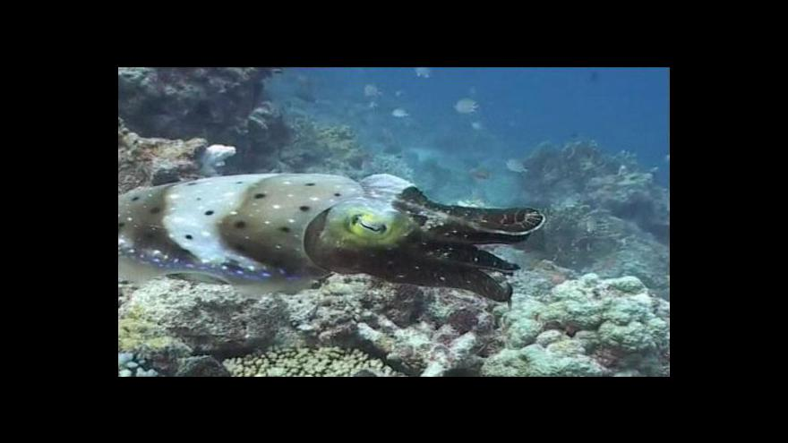 Video Austrálie chce rozšířit ochranu podmořského života