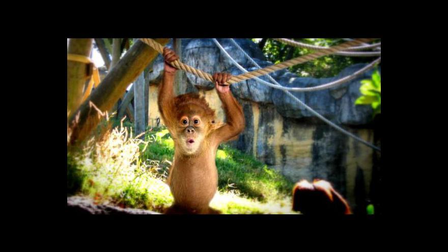 Video České zoo tématem Událostí