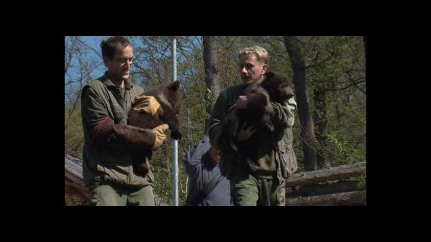 Video NO COMMENT: Medvíďata poprvé venku