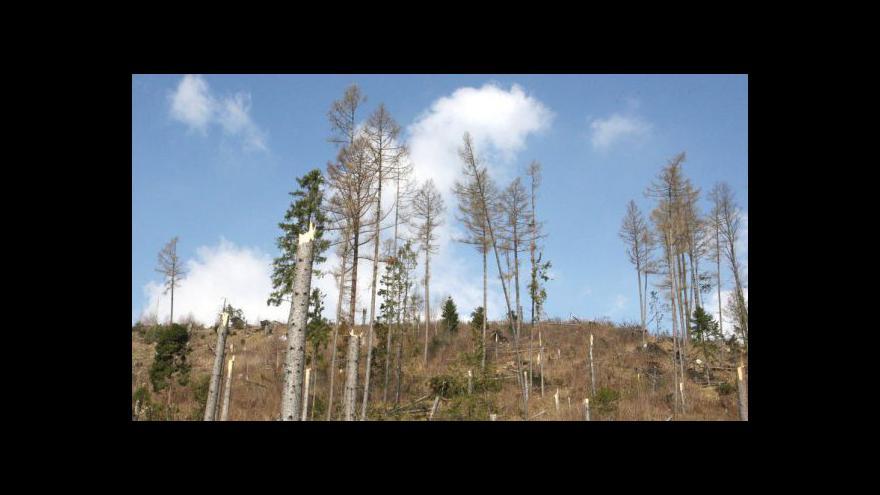 Video Rozhovor s Alenou Zárybnickou