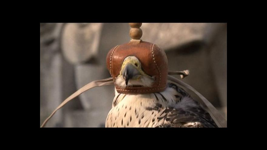extra velké ptáky video