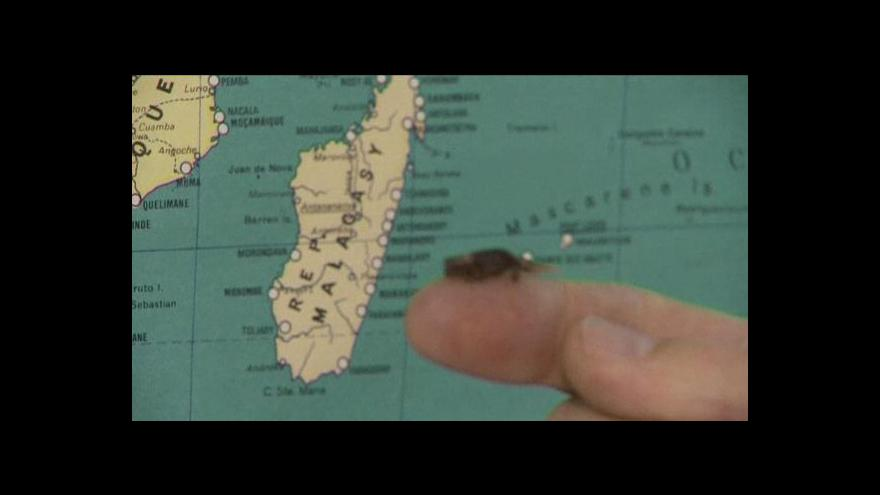 Video Minichameleoni z Madagaskaru