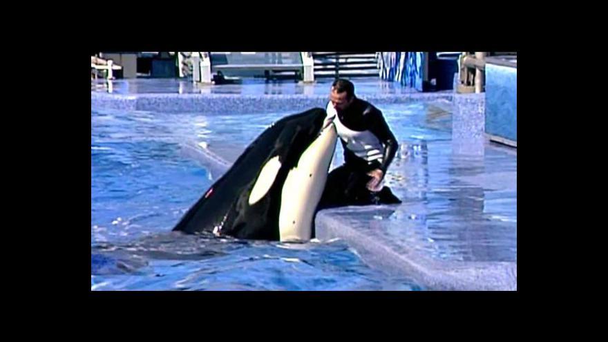 Video Velryby žalují zábavní park