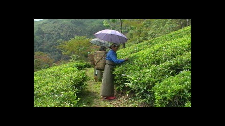 Video Zelený čaj napomáhá soběstačnosti