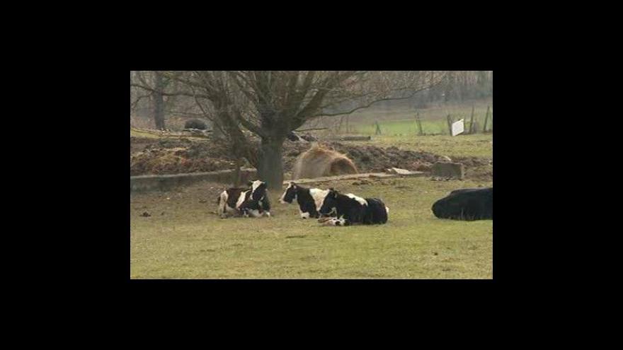 Video NO COMMENT: Kontrola veterinářů na farmě