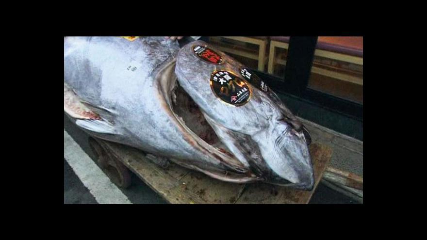 Video V Japonsku se vydražil tuňák za rekordní sumu