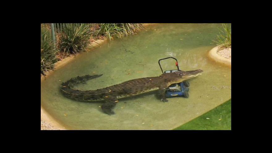Video Australský krokodýl sebral sekačku