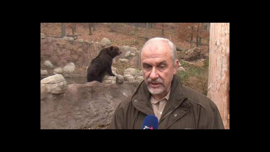 Video Ředitel Zoo Brno Martin Hovorka o medvědici Kamčatce