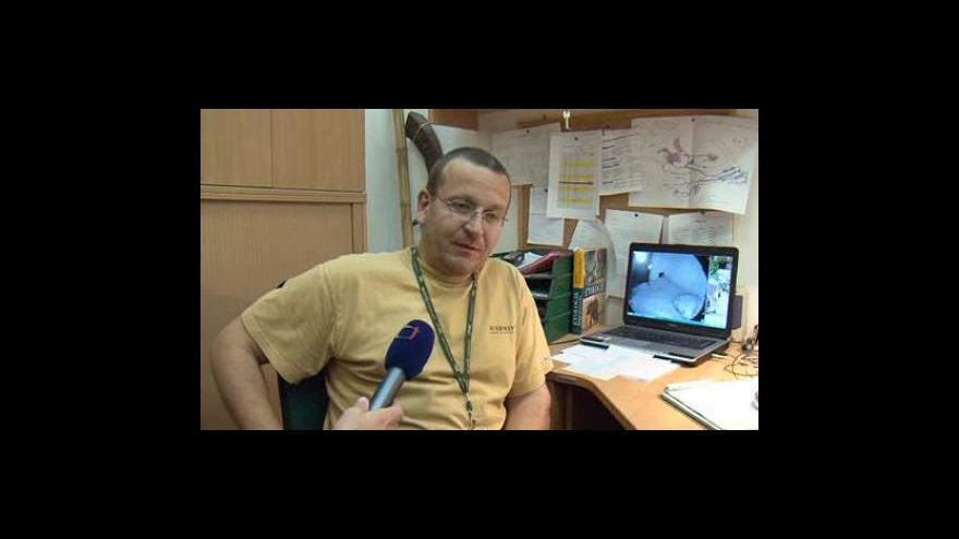 Video Provozní zoolog ZOO Brno Jiří Vítek o narozených mláďatech ledního medvěda - 22.11.2010