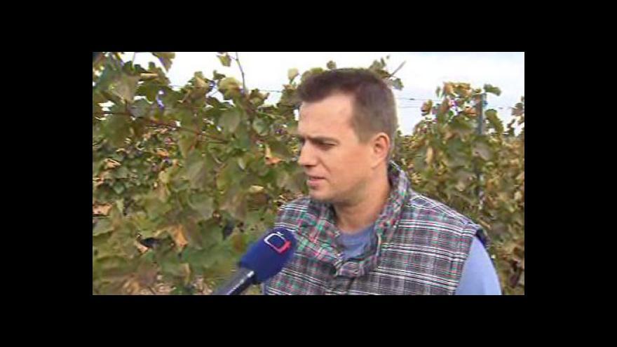 Video Vinař Roman Staněk z Lechovic hodnotí letošní úrodu