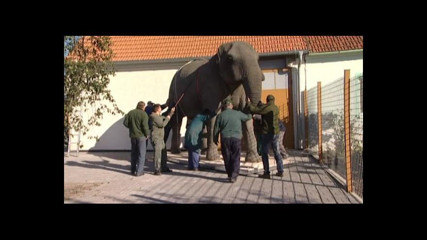 Video O složité práci na preparaci slona ví Radek Franc své