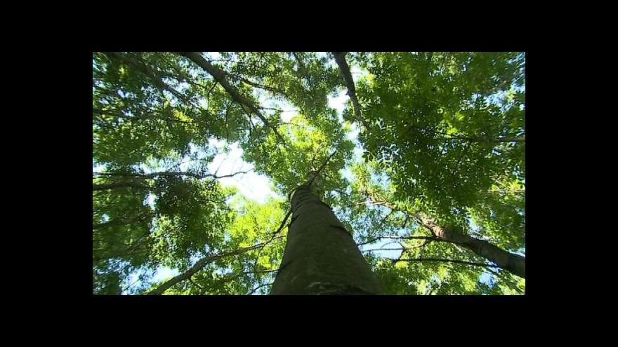 Video Starosta Starého Města Josef Bazala (KDU-ČSL) o kácení mladých stromů
