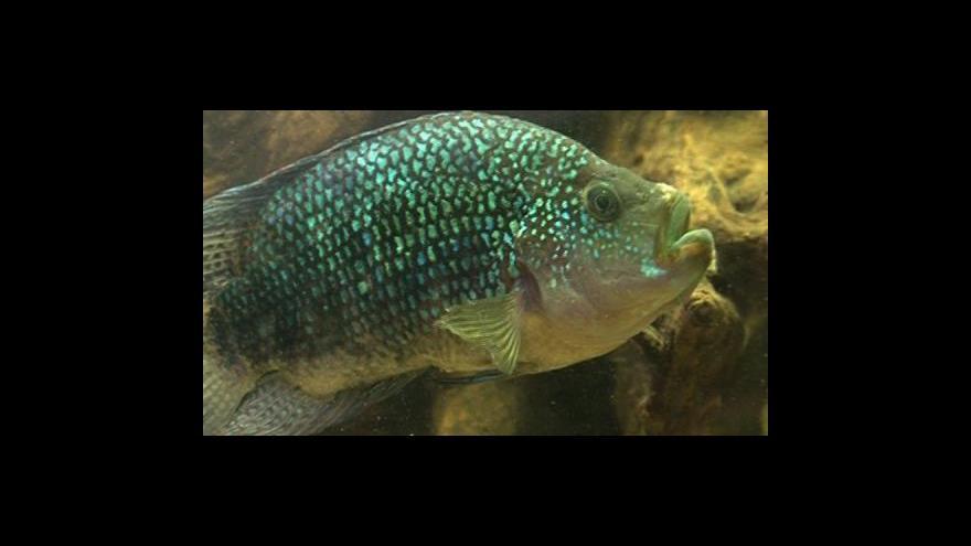 Video NO COMMENT: Stálá akvarijní výstava