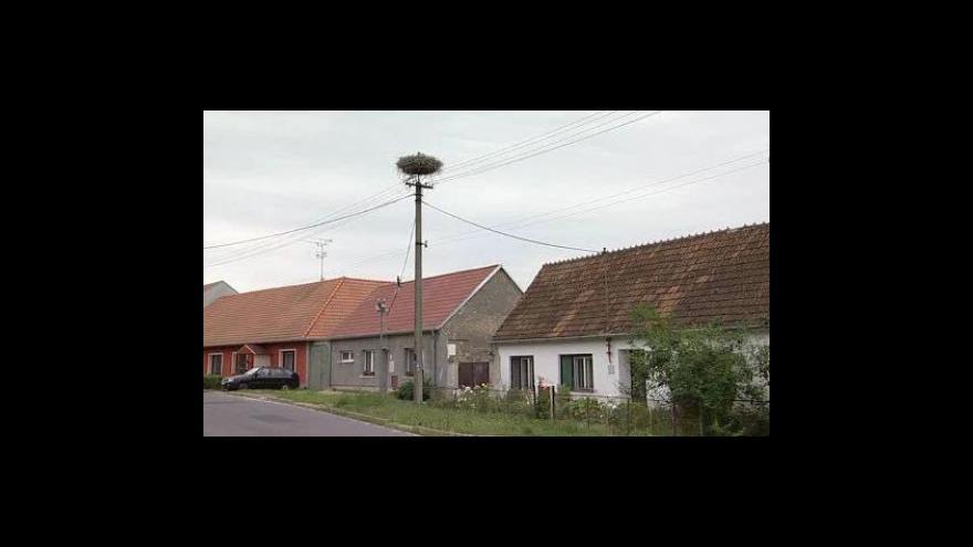 Video NO COMMENT: Stěhování hnízda čápů