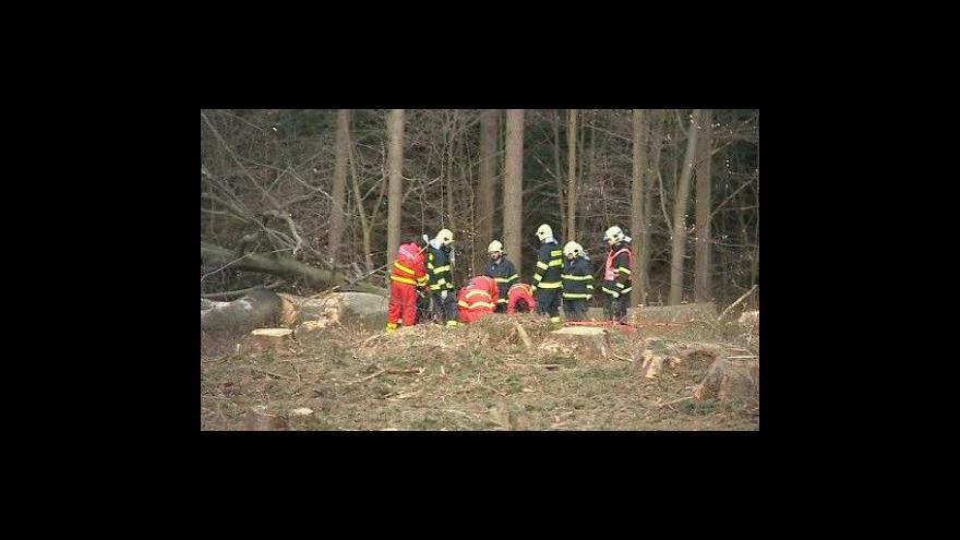 Video NO COMMENT: Lesního dělníka zavalil při práci strom, je v kritickém stavu