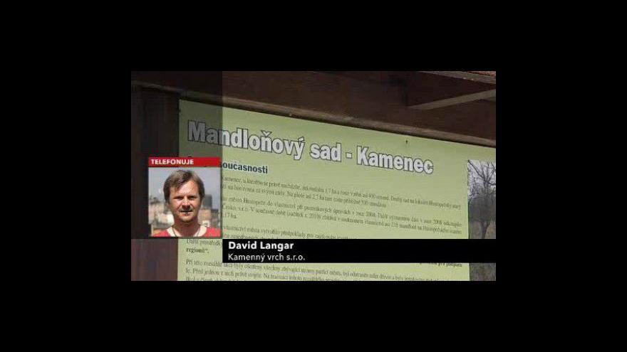 Video Jednatel společnosti Kamenný vrch David Langar o plánech s mandloňovým sadem