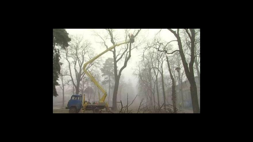 Video NO COMMENT - Kácení kaštanů v městském parku ve Znojmě