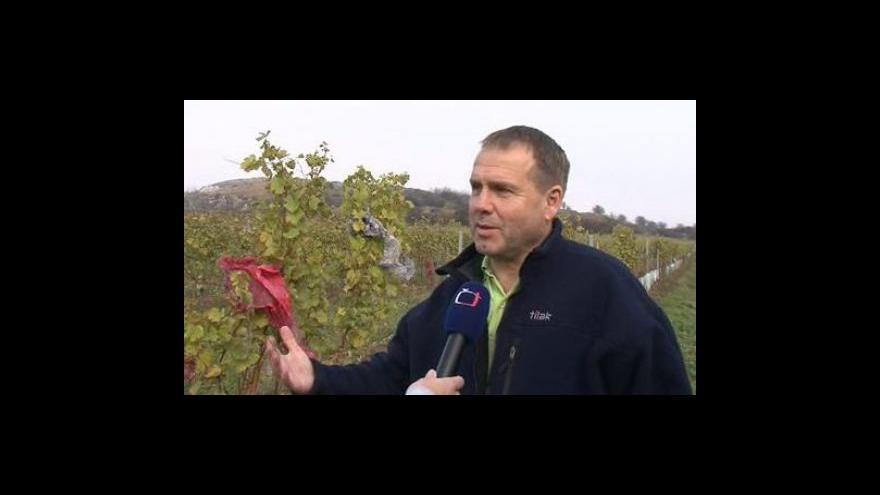 Video Jiří Matuška ze Správy Chráněné krajinné oblasti Pálava o nepořádku z papírových lampionů