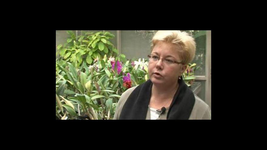 Video Botanička Magdaléna Chytrá radí jak se starat o orchideje z obchodu