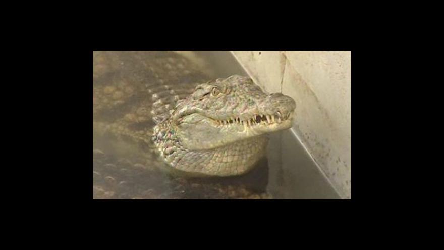 Video Krokodýlí farma v Jevišovicích