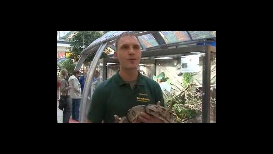 Video Michael Ricker o chovu hadů