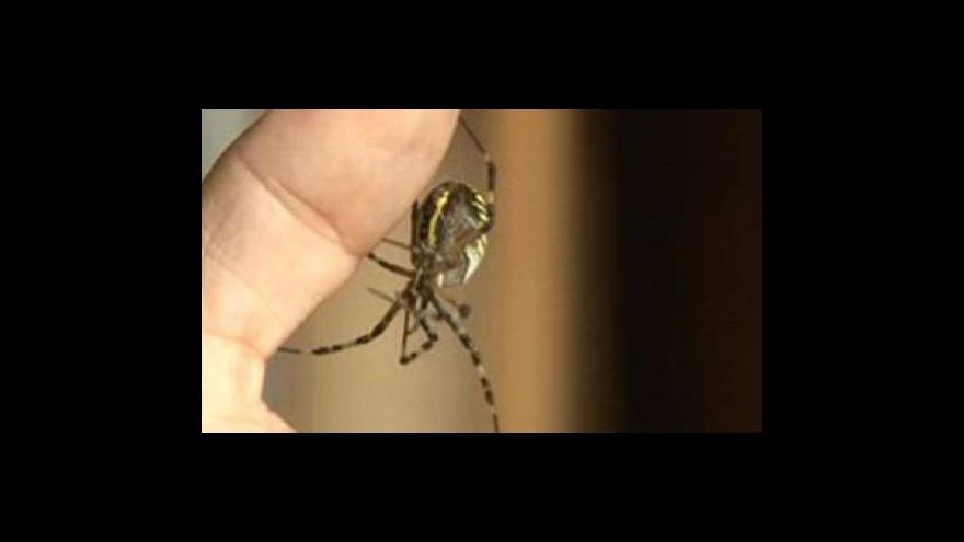 Video Paní Halamová s pavoukem u arachnologa Huly