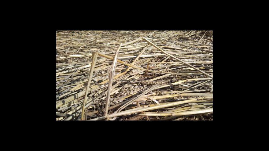 Video Kruhy v obilí nedaleko Šlapanic