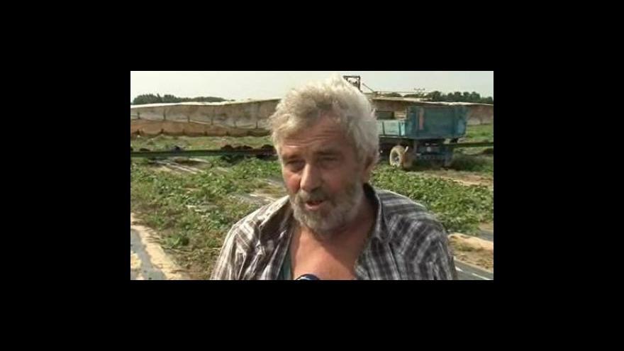 Video Zemědělec Jindřich Prekop o letošní úrodě okurek