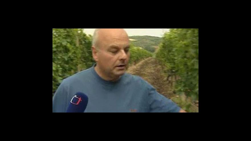 Video Rozhovor s vinařským technologem Vlastislavem Surmanem