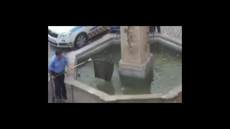 Video Bez komentáře: Záchrana sumce z kašny uprostřed Mikulova