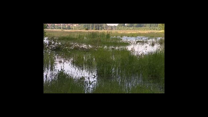 Video Bez komentáře: Komáří kalamita