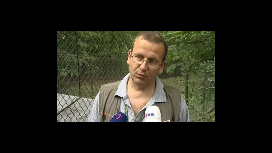 Video Zoolog Jiří Vítek o prvním odchytu vlčat