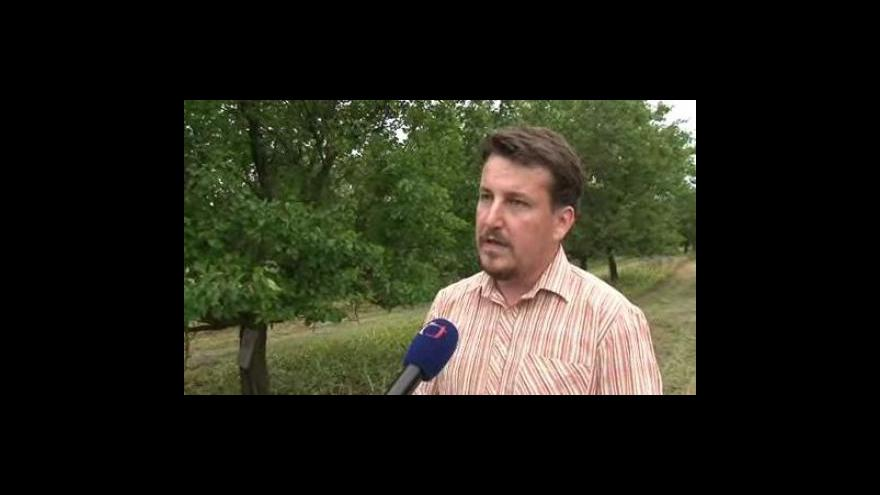 Video Roman Loskot, vedoucí úseku sadů, Zemos, a.s.