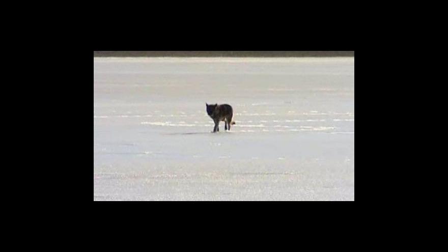 Video Hasiči s dobrovolníky zachránili psa z hladiny křetínské nádrže