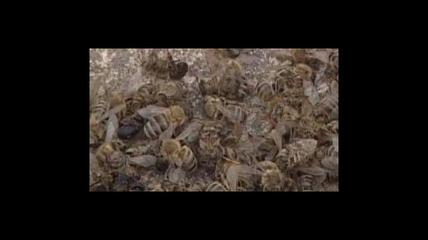 Video Pálení včelstev je bolestná záležitost