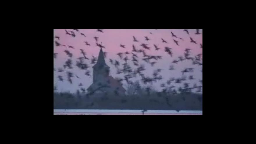 Video Petr Macháček - ornitolog
