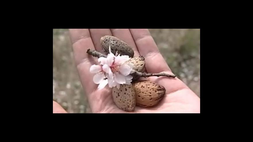 Video Libor Sadílek o obnově sadu