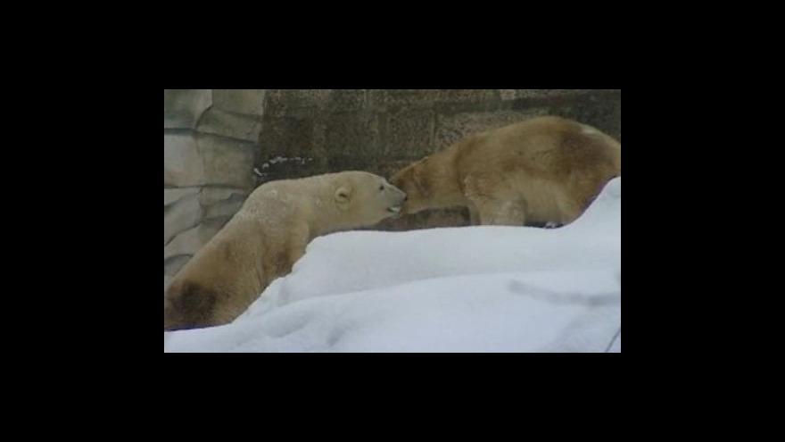 Video zoolog Jiří Vítek k setkání medvědů